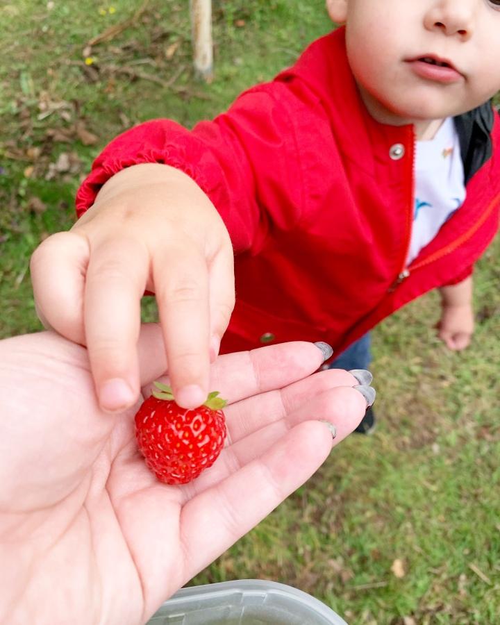Strawberry picking  🍓